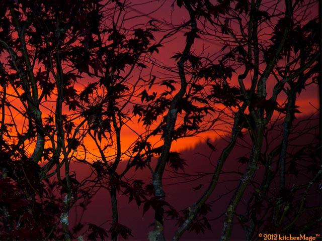 Sunset-maple-orange2